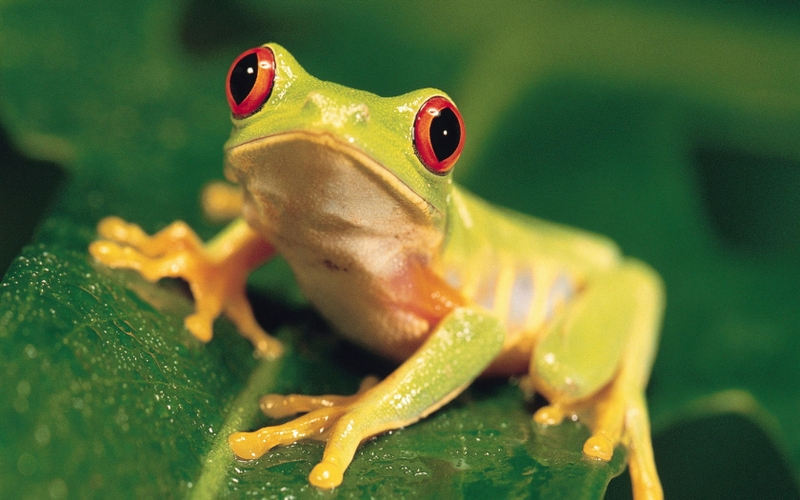 animals wildlife frogs 1680x1050 wallpaper_www.wall321.com_51.jpg