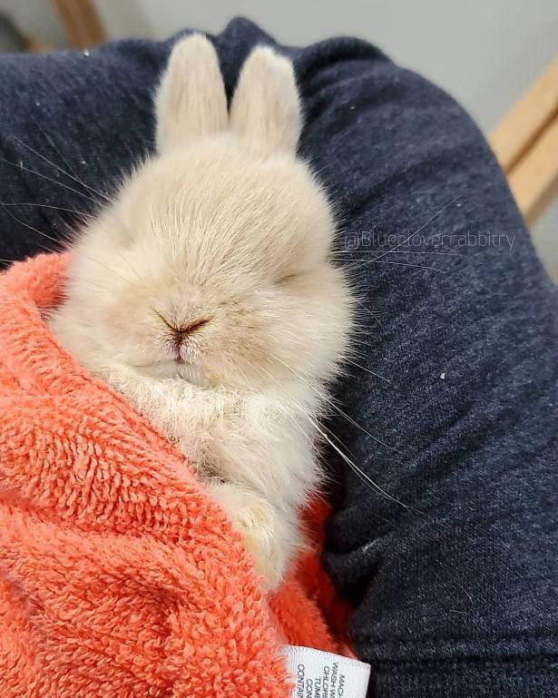 спящий заяц фотки всех гостей проверил