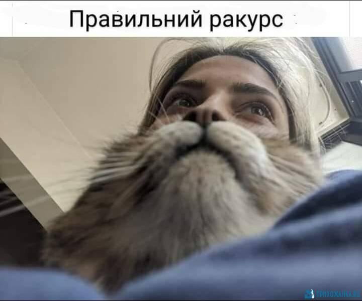 https://prihozhanka.ru/pic/57016.jpg