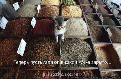 Cмешное из жизни животных. Фото и видео из интернета. - x_2138160b.jpg