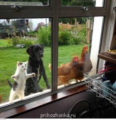 Cмешное из жизни животных. Фото и видео из интернета. - bZqlA530lMg.jpg
