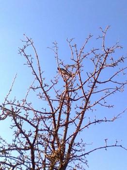 Птичий сад - 1020121775.jpg