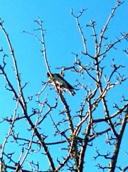 Птичий сад - 1020121776.jpg