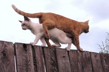 Cмешное из жизни животных. Фото и видео из интернета. - 05D2CVGwG60.jpg