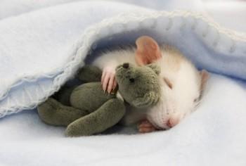 Cмешное из жизни животных. Фото и видео из интернета. - rhs_Dlmtic8.jpg