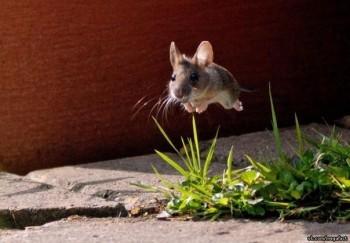 Cмешное из жизни животных. Фото и видео из интернета. - FolDbCFCkFw.jpg