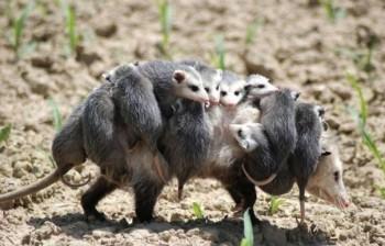Cмешное из жизни животных. Фото и видео из интернета. - lU9YYeOyYmw.jpg