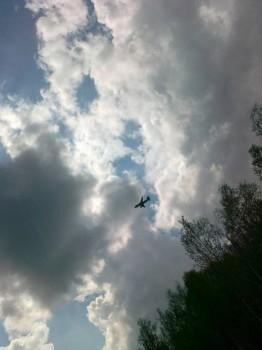 Мне бы в небо.. - IMG_20150510_160016_10.jpg