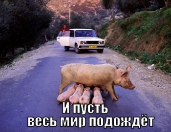 Cмешное из жизни животных. Фото и видео из интернета. - SrYzru08T4g.jpg
