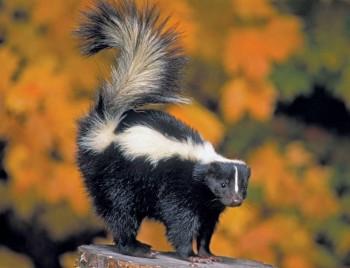 В мире животных фото, видео  - 95243-050-B1BD0E78.jpg