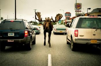 В мире животных фото, видео  - f85774a891178c8f21aaace7af4375ed.jpg