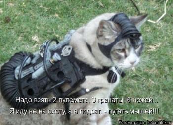 Cмешное из жизни животных. Фото и видео из интернета. - kotomatritsa_OX.jpg