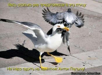 Cмешное из жизни животных. Фото и видео из интернета. - kotomatritsa_rI.jpg