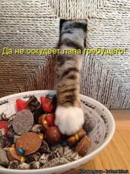 Cмешное из жизни животных. Фото и видео из интернета. - kotomatritsa_Oo.jpg