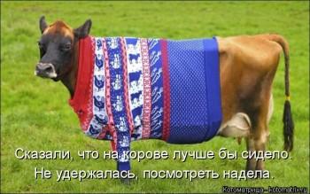 Cмешное из жизни животных. Фото и видео из интернета. - kotomatritsa_v.jpg