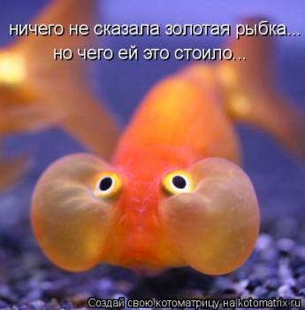 Cмешное из жизни животных. Фото и видео из интернета. - kotomatritsa__n.jpg