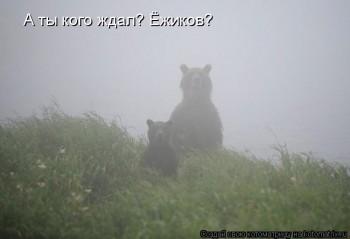 Cмешное из жизни животных. Фото и видео из интернета. - kotomatritsa_w.jpg