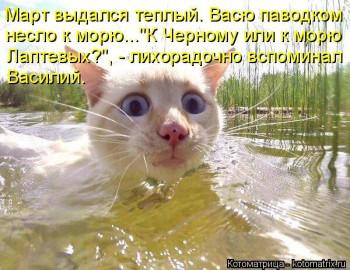 Cмешное из жизни животных. Фото и видео из интернета. - kotomatritsa_iK.jpg