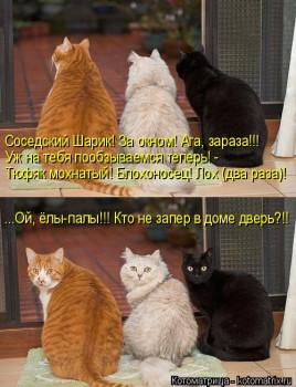 Cмешное из жизни животных. Фото и видео из интернета. - kotomatritsa_jM.jpg