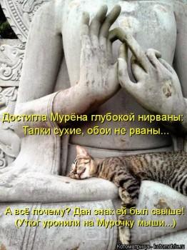 Cмешное из жизни животных. Фото и видео из интернета. - kotomatritsa_1e.jpg