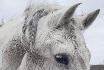В мире животных фото, видео  - h2fN5Nvlass.jpg