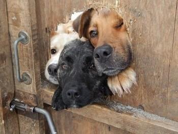 Cмешное из жизни животных. Фото и видео из интернета. - 1437635229.jpg