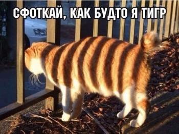 Cмешное из жизни животных. Фото и видео из интернета. - 1437635185.jpg