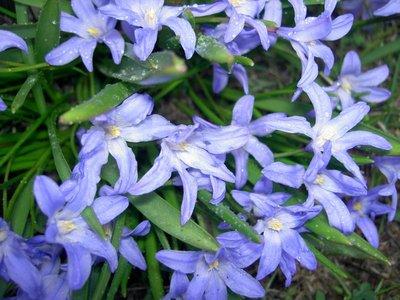Декоративные садовые растения. - PICT5345.JPG