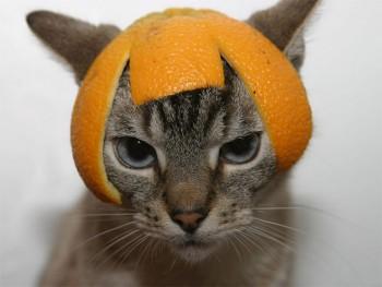 Женщина и спорт - cat-helmet10.jpg