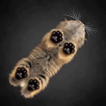 В мире животных фото, видео  - rzcR6UbGE1Q.jpg