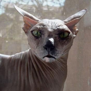 Cмешное из жизни животных. Фото и видео из интернета. - zLYrTKhiEiU.jpg