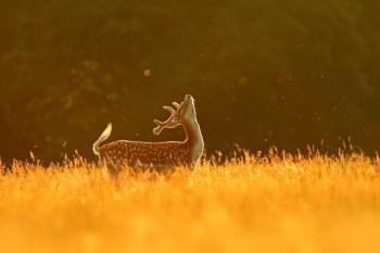 В мире животных фото, видео  - 1720510-R3L8T8D-1000-21.jpg