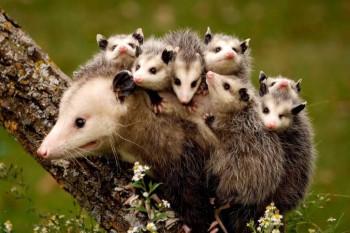Cмешное из жизни животных. Фото и видео из интернета. - Xj-9KosRoLg.jpg