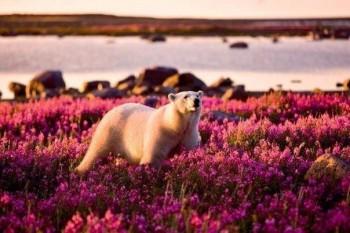 В мире животных фото, видео  - ppagZbKW9Vw.jpg