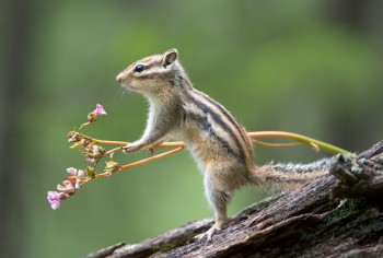 В мире животных фото, видео  - p8fVoMS5Kpg.jpg