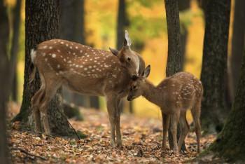 В мире животных фото, видео  - JtYWnN0eFOM.jpg