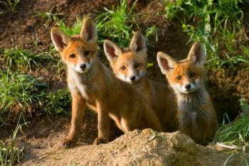 В мире животных фото, видео  - ZDoY6Z0uv5I.jpg