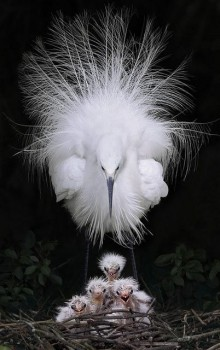 В мире животных фото, видео  - m1lQwpx9svE.jpg