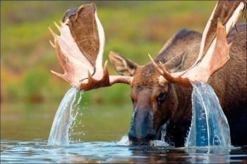 В мире животных фото, видео  - rbi4SSdeaIY.jpg