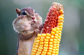 В мире животных фото, видео  - D5o806-wX1A.jpg