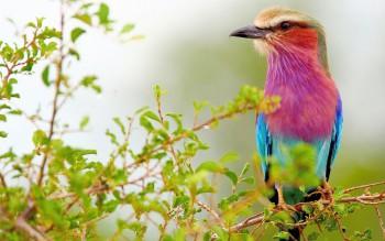 Птичий сад - 1.jpg
