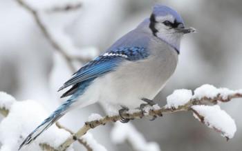 Птичий сад - 2.jpg
