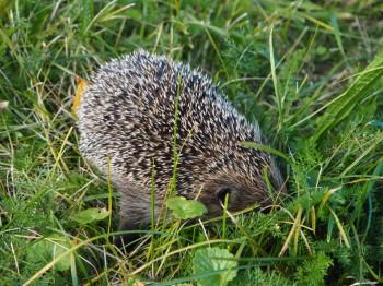 В мире животных фото, видео  - P9093759.JPG
