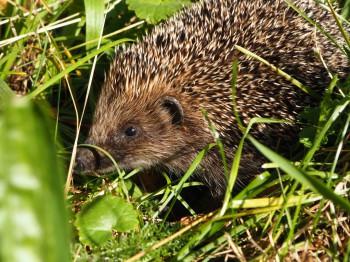 В мире животных фото, видео  - P9093767.JPG