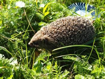 В мире животных фото, видео  - P9093770.JPG