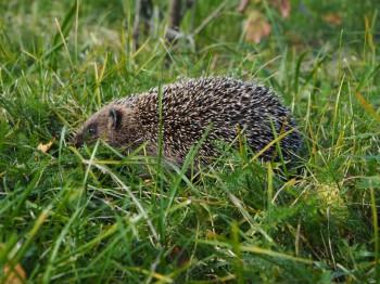 В мире животных фото, видео  - P9093761.JPG