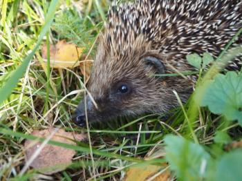 В мире животных фото, видео  - P9093764.JPG