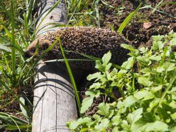 В мире животных фото, видео  - P9093782.JPG