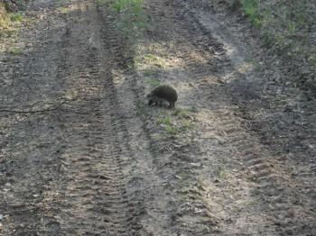 В мире животных фото, видео  - DSCF7835.JPG