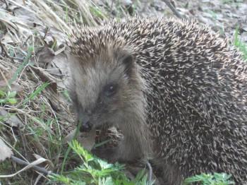 В мире животных фото, видео  - DSCF7845.JPG